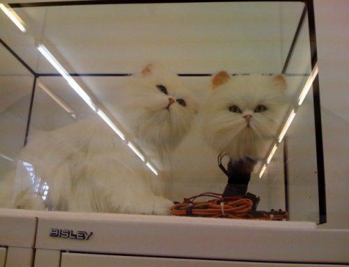 Animatronische Katze für TV-Werbespot